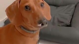 dog love puppy sgo