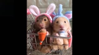 Laugh To These Pets Compilation💗 Cutest Lands