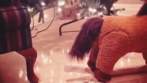 Bulldog puppy scared of rocking horse