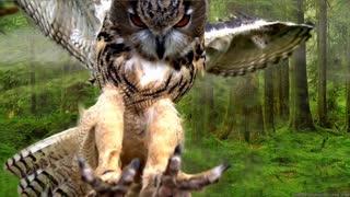 See the splendor of the owl bird