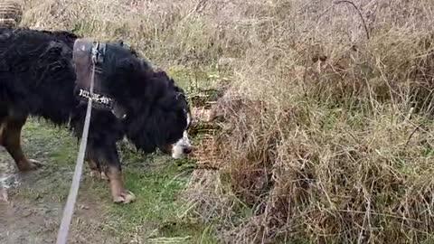 Dog enjoying his muddy walk