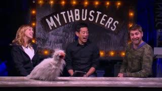 MythBusters: Bird Balance