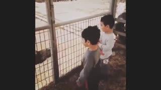 Vídeos de bebés y niños graciosos
