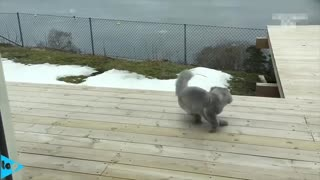 Funny cats, try not to laught