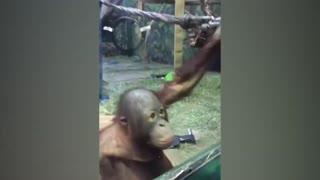 Funniest Moment Baby Meet Animals
