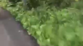 Pov driving golf cart guys fast tip over hard brake