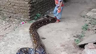 Parents Film Their Toddler Playing With A Giant Python