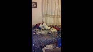 Dreaming Husky having a nightmare