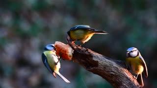 Beautiful birds1