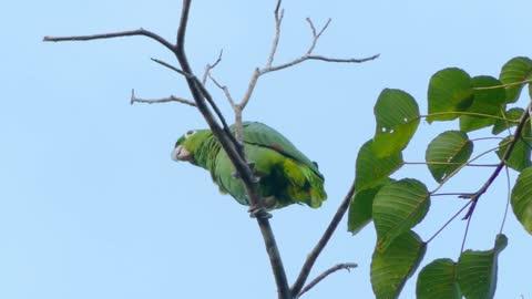 A green bird