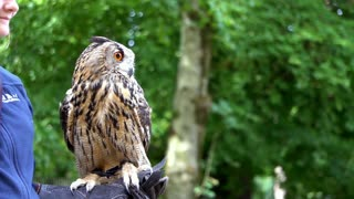 Beautiful owl5