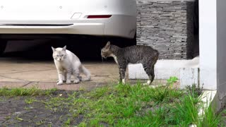 ❤ Two Cats Fighting ❤