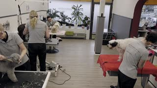 People Grooming Dogs $30 to $100.
