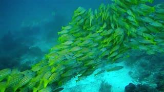 Fish, saltwater.