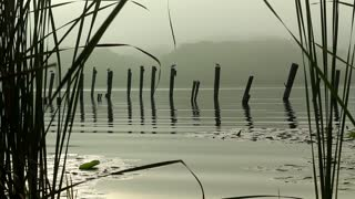 Through the Reeds (Free to Use HD Stock Video Footage)
