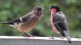 Supreme birds song and feeding