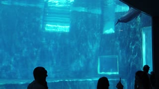 Watch a dolphin in a large glass basin as it welcomes visitors