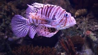 Fish dance!