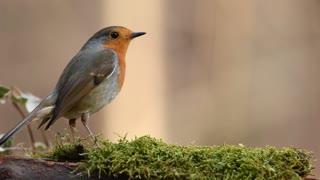 Beautiful Bird 2