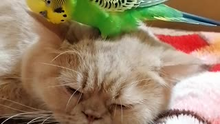Кот и птица, милые животные #28