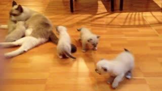 Cute Family kittens