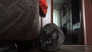 My cat Marcy