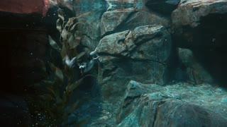 Birds hunt fish under water