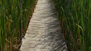 A walk through the Tall Grass