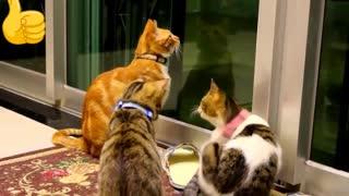 Funnny Cats