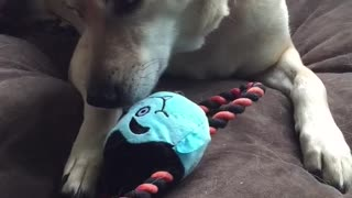 Mama dog steals puppy's toy, refuses to share