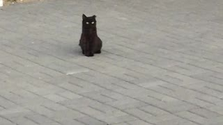 cat in dance