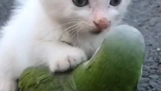 Cat Playing with Parrot