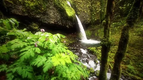 Nature Therapy: Relaxing Full Motion Forestry