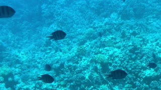 Ocean Egypt,Hurghada