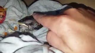 Rescued bird takes water from human