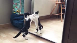 Funny Cat And mirror Video | Cat Funny Video