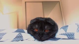 Gorgeous Kitty Fights Sleep