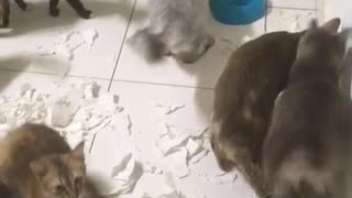 Cats Destroyed Toilet Paper and Didn't Admit It