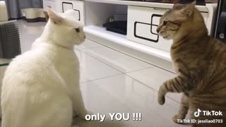 Can Cats Really Talk? Watch This Funny Video To FInd Out!