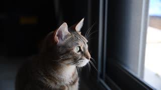 New Best Cat Kitten Kitty Pet Cute Adorable Fur Furry 2021