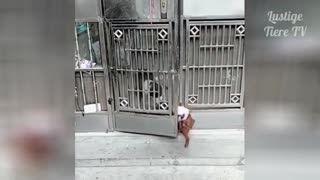 Hilarious animal video