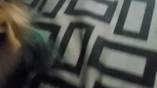 Teacup playing with toy