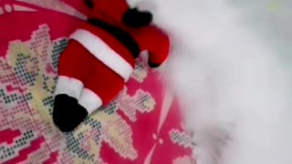 Kitten Bitting Santa Claus
