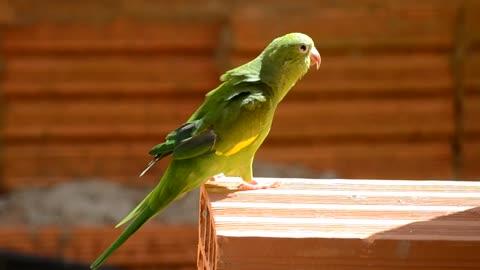 Male beautiful parrot