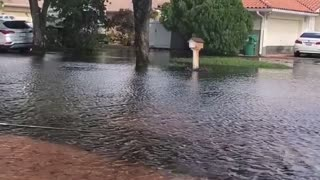 Catching a Fish in the Street During a Flood