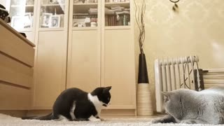 funny cats playing 1