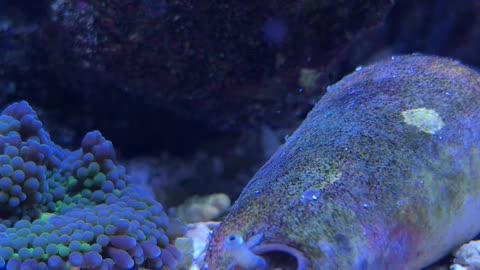 Conch still alive!