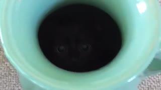 Assassin Kitten Attacks