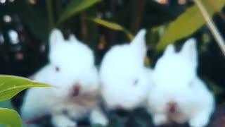 3 beautiful rabbits eating