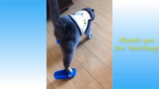 Cute and funny cats videos😂😂😂